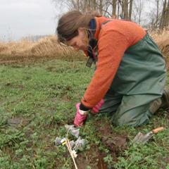 Mariet in a winter flooding experiment, Feb. 2012. By A. Garssen